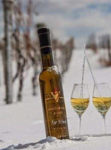 «Айсвайна» не будет: в Германии впервые не замерз виноград для изготовления ледяного вина