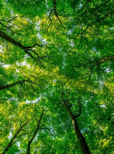 Из-за парникового эффекта деревья стали расти вдвое быстрее