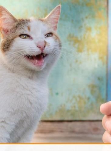 «Не зли меня!»: американский инженер создал приложение – «переводчик с кошачьего языка»
