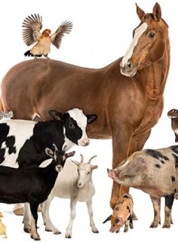 В Украине начали действовать европейские Требования к благополучию сельскохозяйственных животных