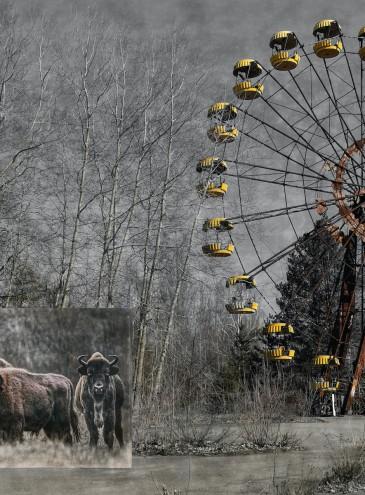 Украинский фотограф «поселит» животных со всего мира в Чернобыльской зоне к годовщине катастрофы