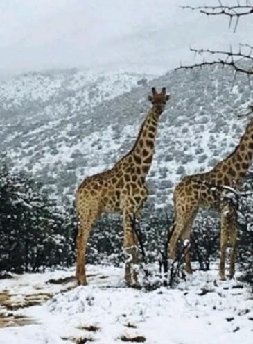 У Південній Африці сніг і морози – там, де їх найменше чекали